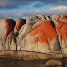 On the Bay of Fires by jayview