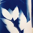 cyanotype leaves by evon ski