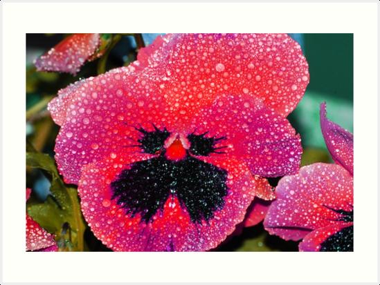 Hot pink pansy art prints by tori snow redbubble hot pink pansy by tori snow mightylinksfo