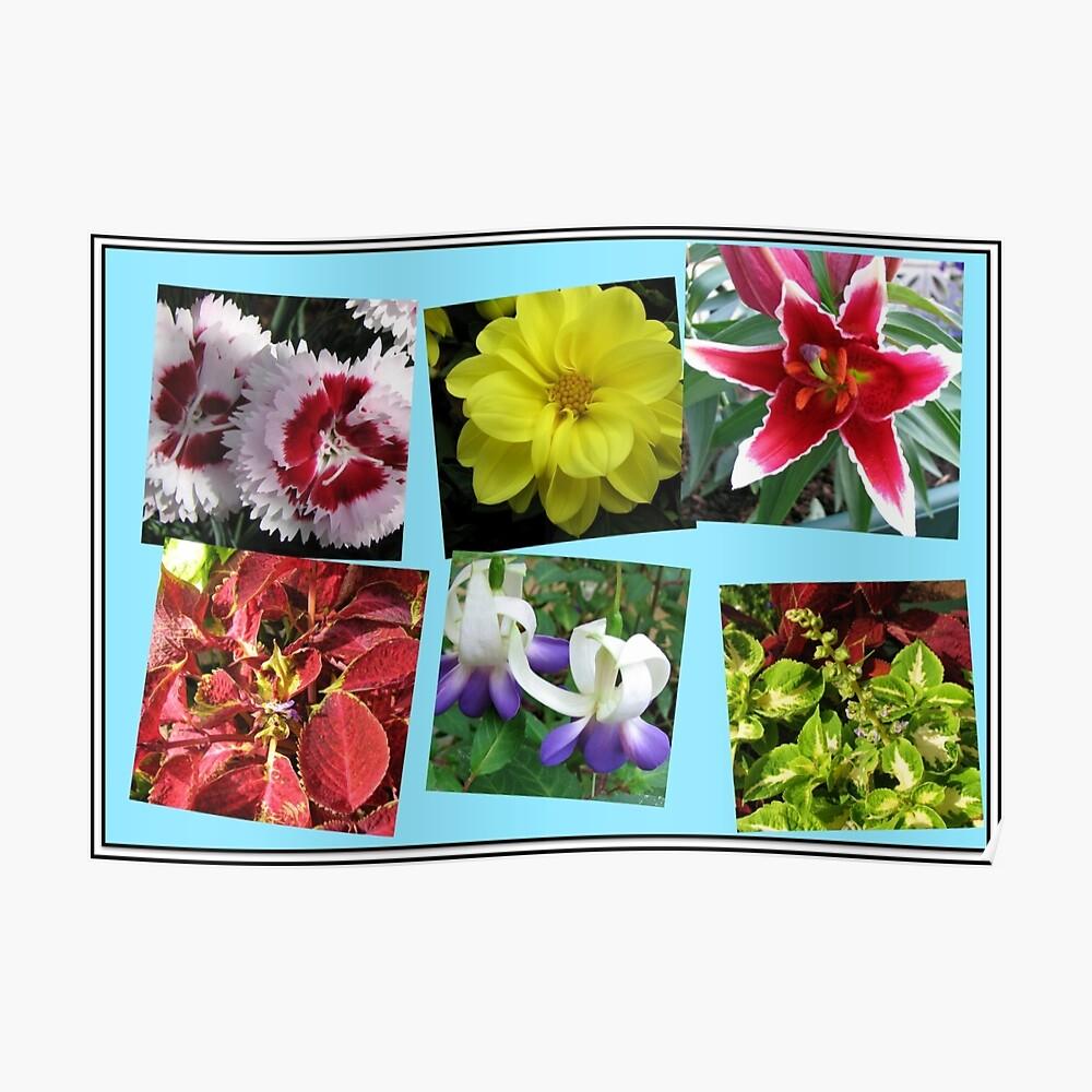 Erinnerungen an Sommerblumencollage Poster