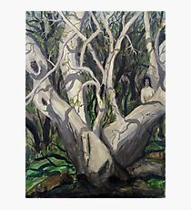 Sycamore Tree in Peppersauce Canyon, Arizona Photographic Print