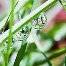 The sprinkler was here II by MarthaBurns