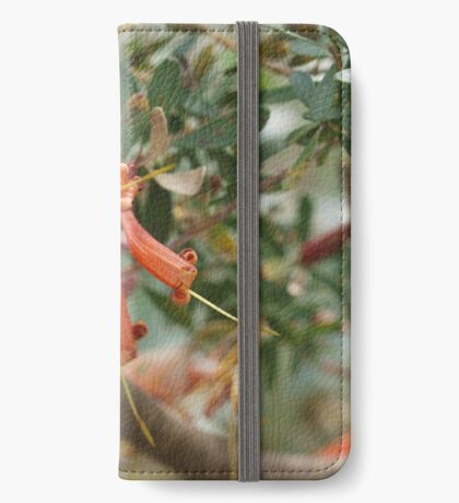 Lambertia inermis iPhone Wallet