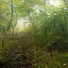 Mystic Path by Tibby Steedly