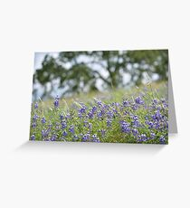 Lupin Meadow Greeting Card