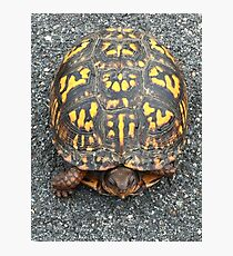 Eastern Box Turtle - Live If you like, purchase, try a cellphone cover thanks! Photographic Print