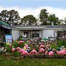 Flamingo Paradise by WildestArt