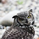 Great Horned Owl by Michelle Callahan