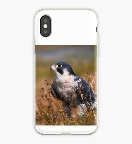 Peregrine Falcon close-up iPhone Case