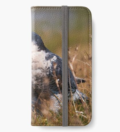 Peregrine Falcon close-up iPhone Wallet