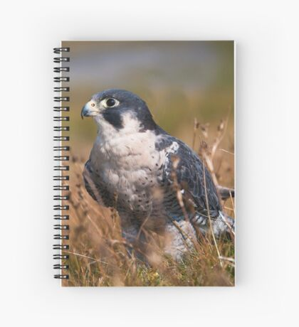 Peregrine Falcon close-up Spiral Notebook
