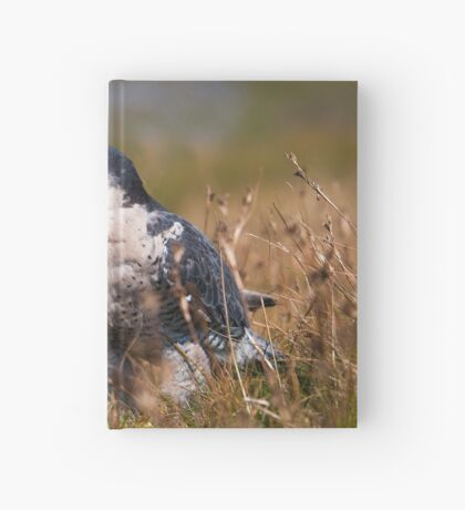 Peregrine Falcon close-up Hardcover Journal