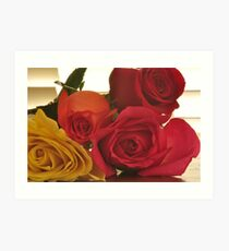 Four Colors of Roses, As Is Art Print