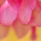 Crabapple Blossom Bokeh by Kim McClain Gregal