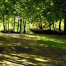 Shady path by Shulie1