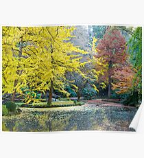 Autumn, Alfred Nicholas Memorial Gardens, Victoria, Australia. Poster