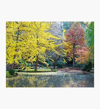 Autumn, Alfred Nicholas Memorial Gardens, Victoria, Australia. Photographic Print