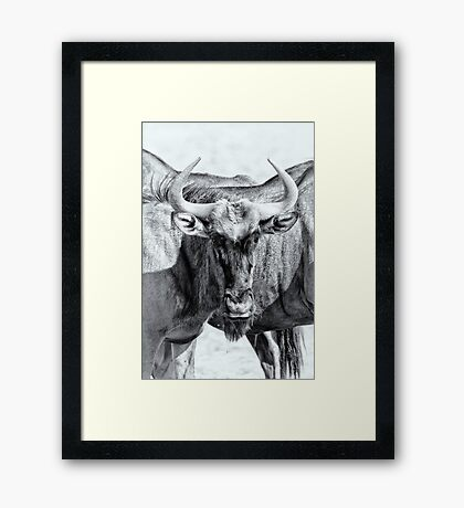 Who you lookin' at? Framed Print