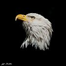 Bald Eagle Looking Skyward by Jeff Goulden