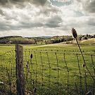 Bridgewater Landscape by Dfeivor