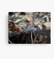 Creepy Crawly Metal Print