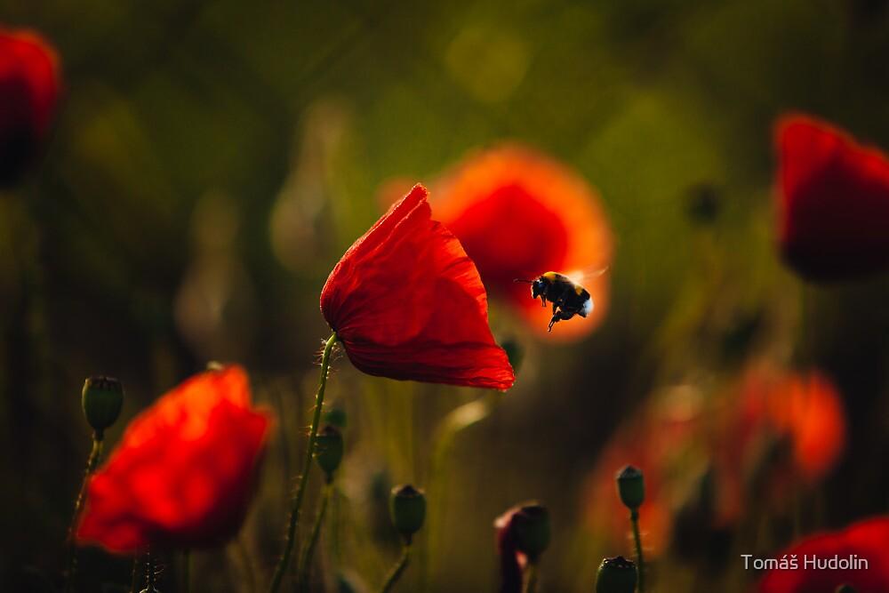 Bumble-bee by Tomáš Hudolin