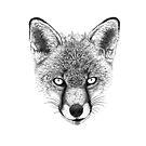 Fox Head Ink Drawing by Nigel Tinlin