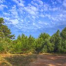 Maritime Forest by jean-louis bouzou