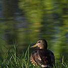 Quack or Duck! by HoremWeb
