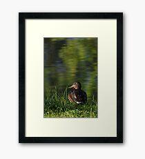 Quack or Duck! Framed Print
