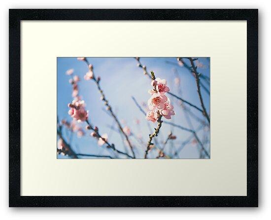 Cherry Blossom by unikatdesign