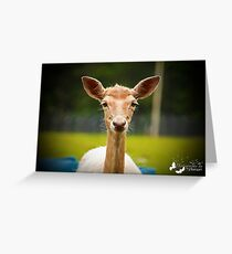 Eyebrows and Wiskers Greeting Card