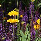 Garden time.. by FotoBloke