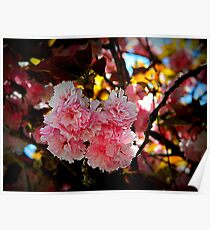 Cherry Blossoms       ^ Poster