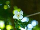 Wildflower with Ants by FrankieCat