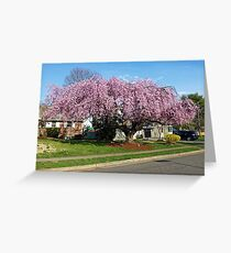 Weeping Cherry Greeting Card