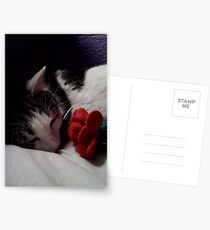 Snuggle Muffin With a Rose Postcards