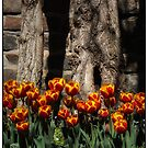 Tulips by Margaret Metcalfe