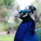Bird Of Beauty No.1 by Erin Davis
