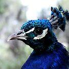 Bird Of Beauty No.2 by Erin Davis