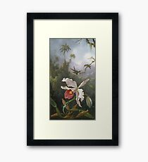 Martin Johnson Heade - Two Hummingbirds Above A White Orchid. Still life with flowers: hummingbird, nest, orchid,  lotus blossom, wonderful flower, forest, passion garden, magnolias Framed Print