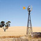 Wind driven water pump South Australia by John Wallace