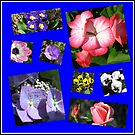 Blumen-Power-Collage von BlueMoonRose