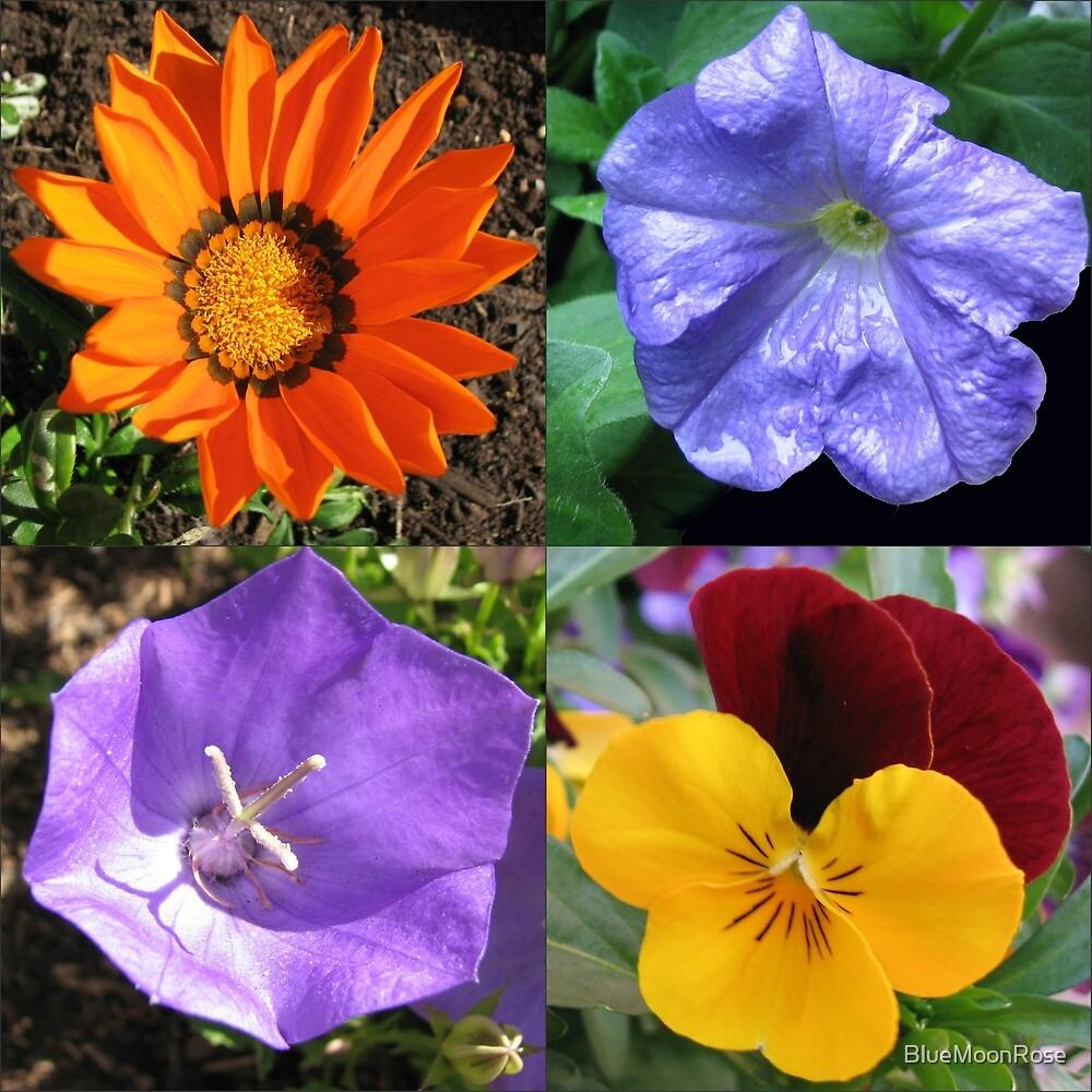 Quartett Sommer Blumen Collage von BlueMoonRose