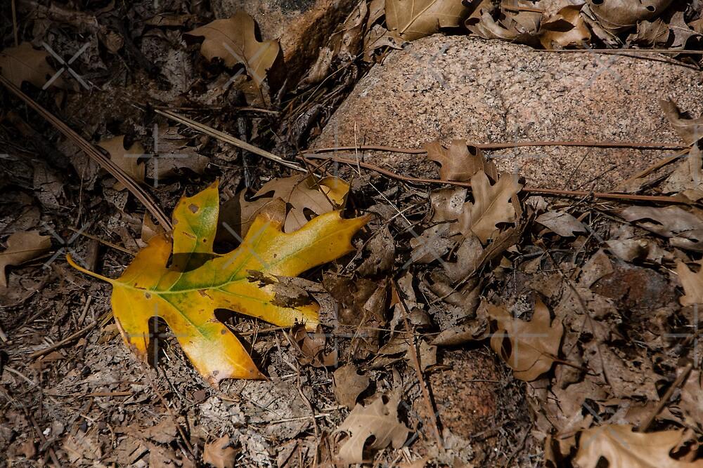 The Last Leaf by CarolM