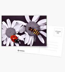 Selective colour Postcards