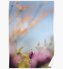 Tranquil lavender Poster