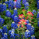 Red White And Blue by Inge Johnsson