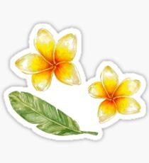 Plumeria flowers and banana leaf Sticker