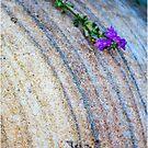 A flower by Alan Robert Cooke